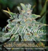 Delicious Auto Northern Light Blue discount Feminized seeds